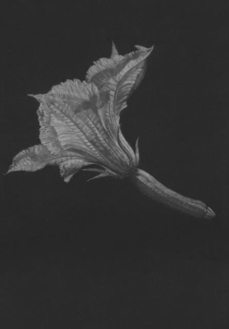 Noirs velours - Estampillé IV Menuiserie