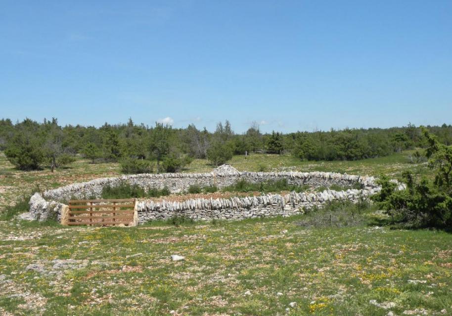 Atelier participatif récolte de graines